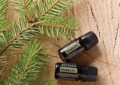 Douglas fir (sapin douglas)